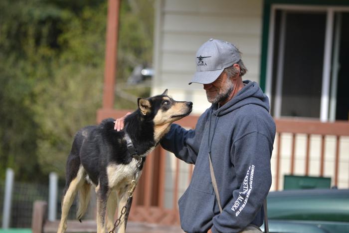 alaska roadtrip husky schlittenhund