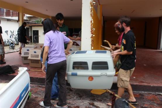Sterilisation Koh Chang - Helfer tragen Box