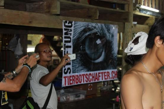 Sterilisation Koh Chang  Tierbotschafterplakat