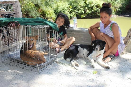Sterilisation Koh Chang Warten auf OP