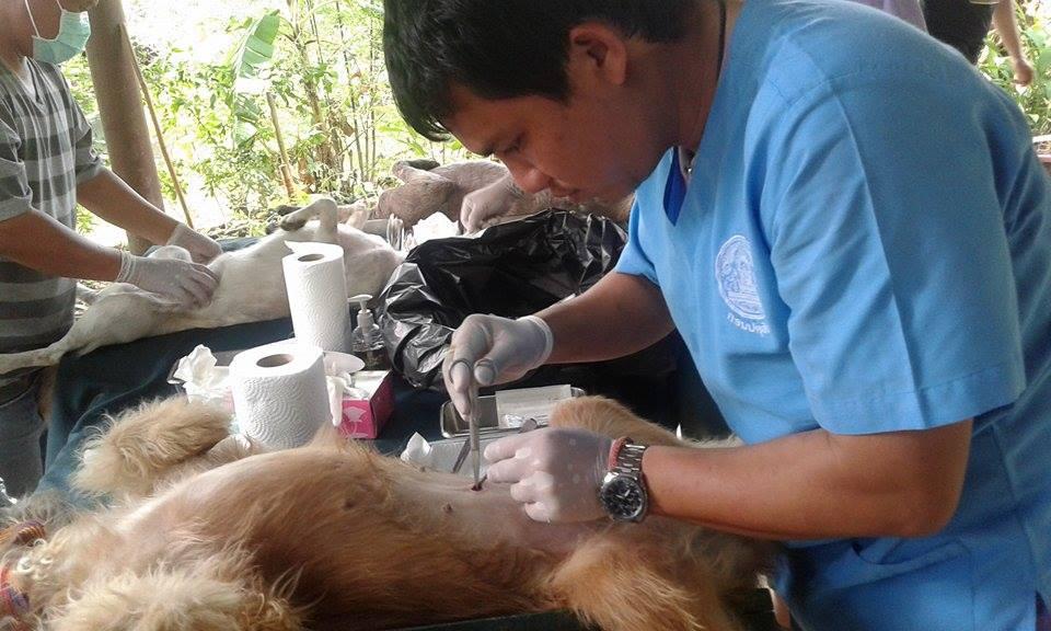 Sterilisierung Koh Chang Arzt bei der Arbeit cl