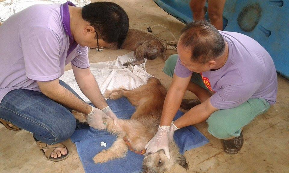 Sterilisierung Koh Chang cl zwei Ärzte mit Hund
