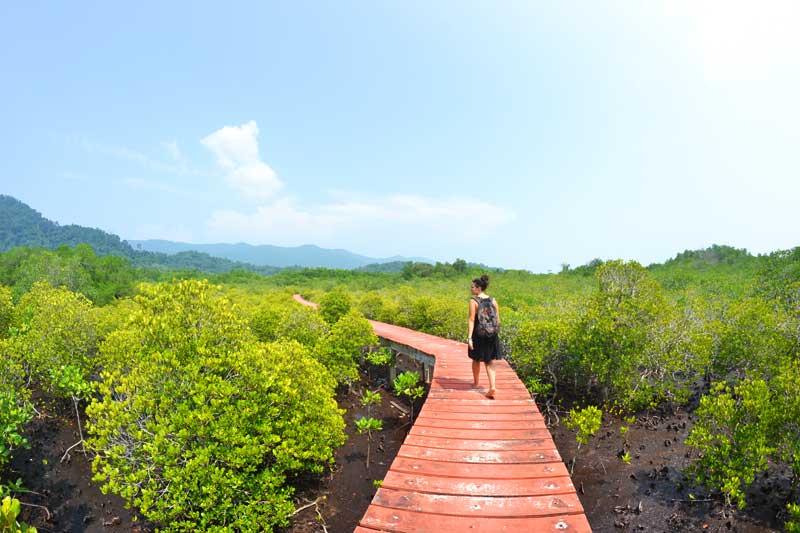 Mangroven-Hideaway-ostküste
