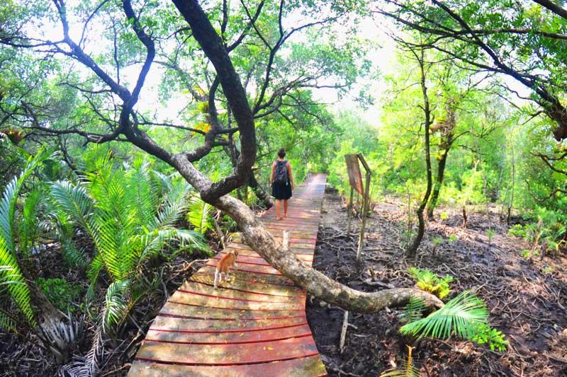 koh-chang-Mangroven-Hideaway