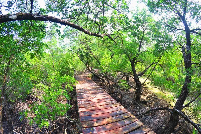 ostküste-koh-chang-Mangroven-Hideaway