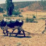 Dürre und Hungersnot – heuer keine Reise nach Äthiopien möglich