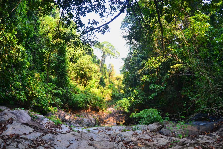 jungle-trekking-koh-chang