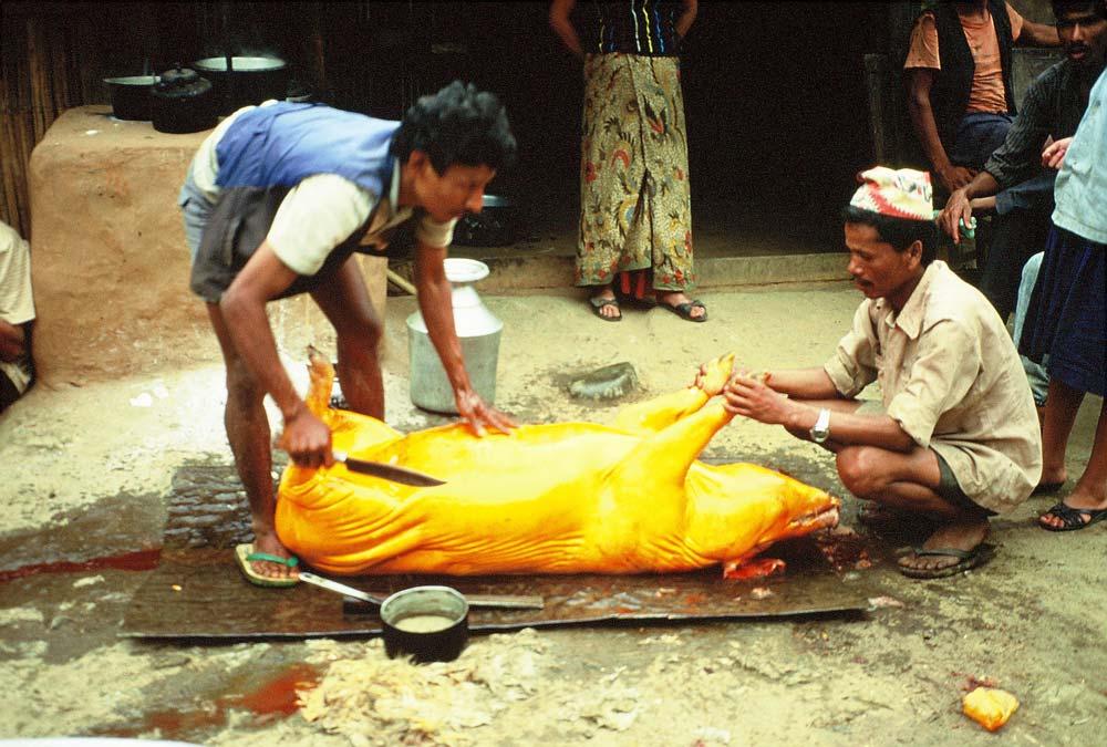 schwein-nepal-alte-fotos