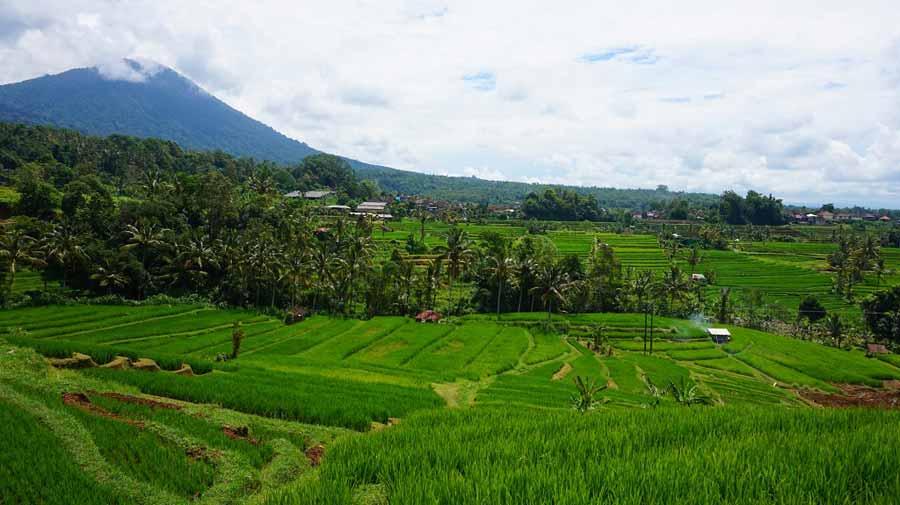 Die-Reisfelder-gehören-mit-zum-Schönsten-was-die-Erde-zu-bieten-hat-(2)