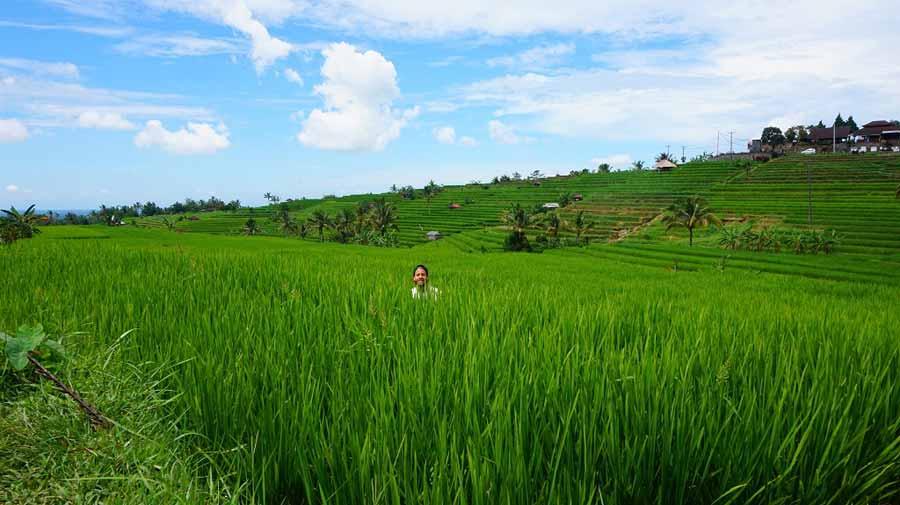 Die-Reisfelder-gehören-mit-zum-Schönsten-was-die-Erde-zu-bieten-hat