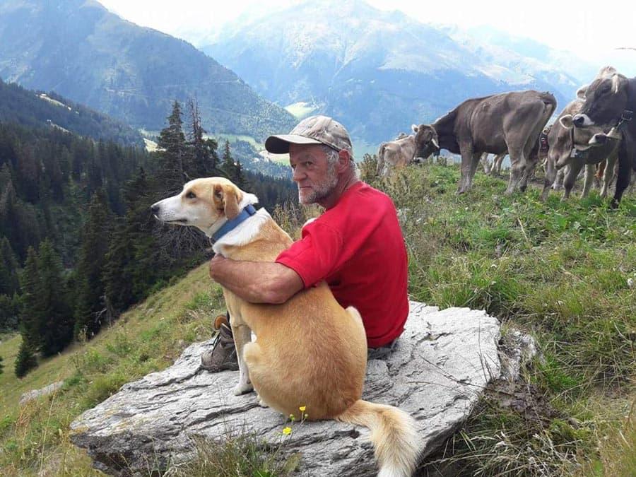 schweiz-alm-sommer-hund-kuh