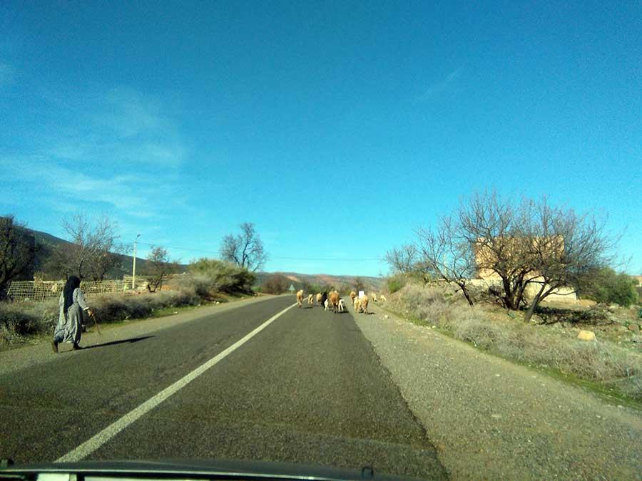 marokko-straße-schafe-auto-mietauto-road-trip-afrika
