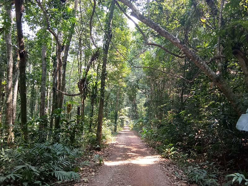 Klong-Yai-Kee-Wasserfall-koh-kood-thailand-insel-weg-jungle