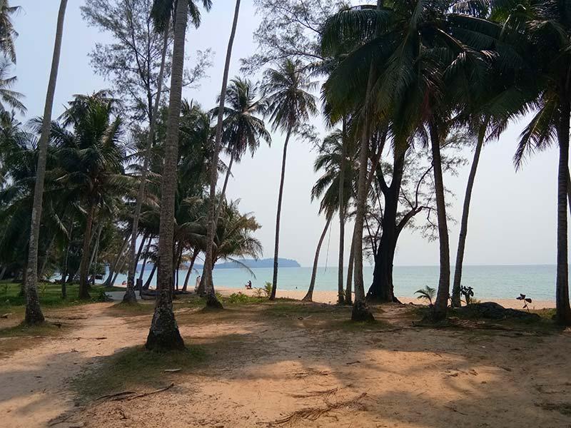 strand-palmen-koh-kood-thailand-insel