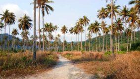 strasse-koh-kood-palmen-roller-insel-thailand