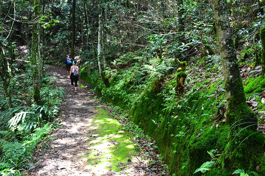 Nagarkot-nepal-trekking-aktivitäten-natur