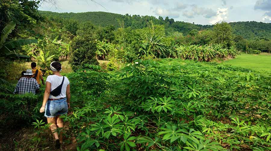 loei-reise-felder-thailand-norden-isaan